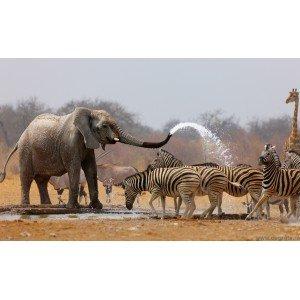 Fotografie tapet Safari 1