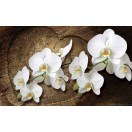Wallpaper Mural Orchid white