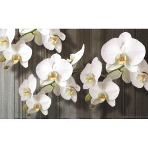 Fotografie tapet Orhidee Alba 2 L