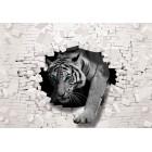 Fotografie tapet Tigru - perete de caramida 3D