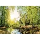 Fotografie tapet Padure verde