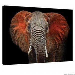 Tablou Canvas Elefant - arta
