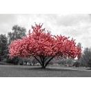 Fotografie tapet Roz culoare