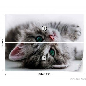 Fotografie tapet Pisica 3D