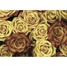 Fotografie tapet Trandafiri vintage 3D XL