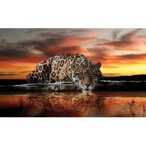 Fotografie tapet Leopard 2