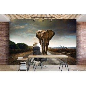 Fotografie tapet Elefant