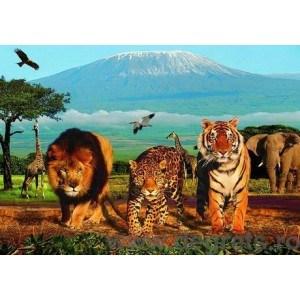 Fotografie tapet Safari