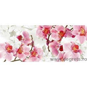 Fotografia tapet Orhidee