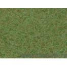 Tapet hârtie Taimi închis verde