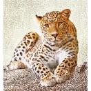 Fotografie tapet Leopard