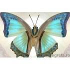 Fotografie tapet Fluture