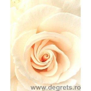 Fotografie tapet Bej trandafir