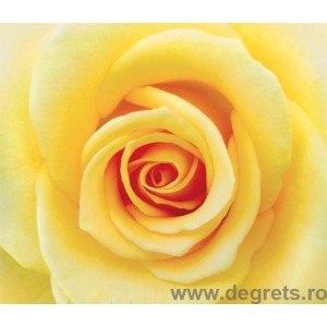 Fotografia tapet Trandafir galben