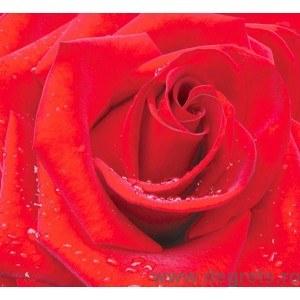 Fotografie tapet Rosu trandafir