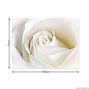 Tablou Canvas Trandafir Alb