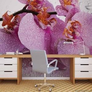 Fotografie tapet picaturi de Orhidee