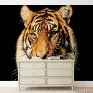 Fotografie tapet Tigru 2 3D