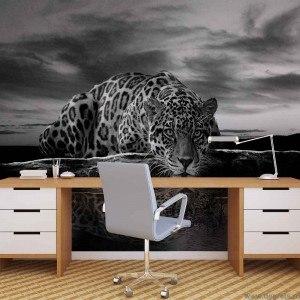 Fotografie tapet Leopard 1