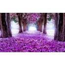 Fotografie tapet Drum flori violet 3D