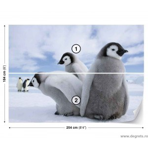 Fotografie tapet Pinguini