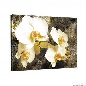 Tablou Canvas Orhidee 2