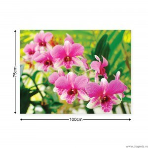 Tablou Canvas Orhidee 3