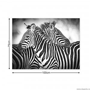 Tablou Canvas Zebra negru alb