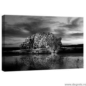 Tablou Canvas Leopard 1 S
