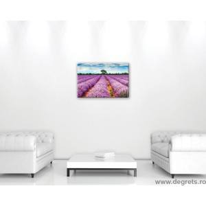 Tablou Canvas Lavanda 1 S