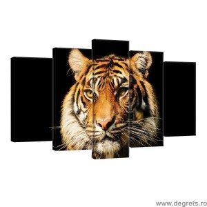 Set Tablou Canvas 5 piese Tigru 2 3D