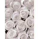 Fotografie tapet Trandafiri albi 3D