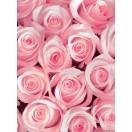 Fotografie tapet Trandafiri roz 3D