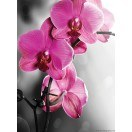 Fotografie tapet Orhidee ticlam 1 L 2