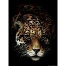 Fotografie tapet Jaguar L 2
