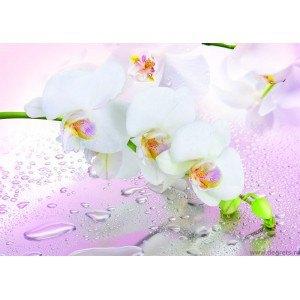 Fotografie tapet Miraj de orhidee