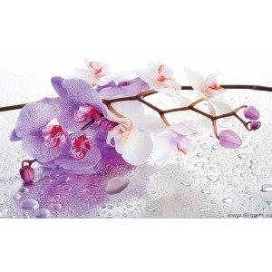 Fotografie tapet Orhidee ticlam 2