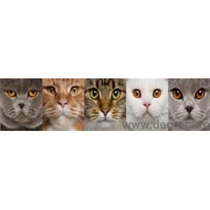 Panou decorativ pisici