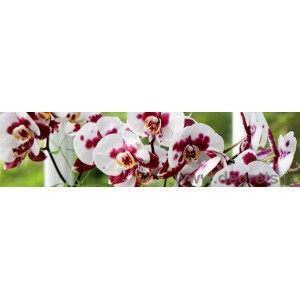 Panou decorativ orhidee salbatica