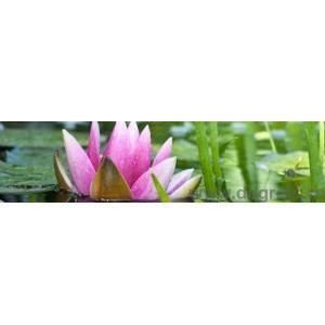 Panou decorativ lotus roz
