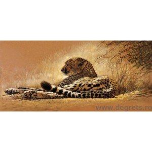 Fotografie tapet Cheetah