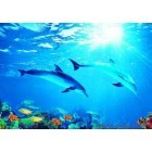 Fotografie tapet delfin